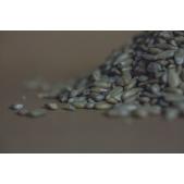 Slunečnicová semena loupaná BIO
